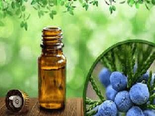 Полезные свойства масла можжевельника и способы его применения
