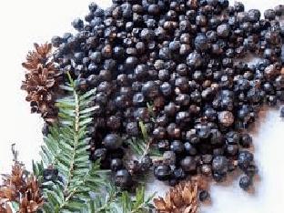 Чем полезны ягоды можжевельника