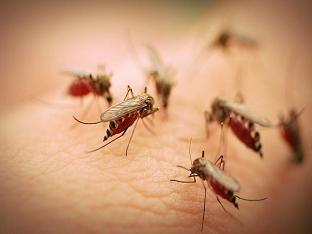 Лихорадка денге: симптомы, лечение и профилактика