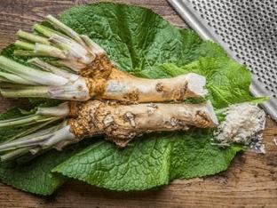 Полезные и лечебные свойства листьев хрена