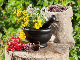 Какие травы можно использовать для повышения иммунитета