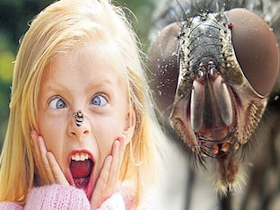Что делать при аллергии на укусы насекомых